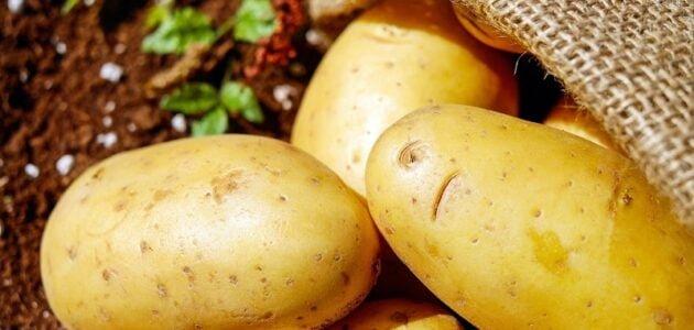 مواسم زراعة البطاطا وطريقة زراعة البطاطا