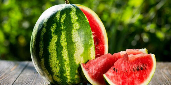 مواسم زراعة البطيخ الأحمر وطريقة زراعة البطيخ الأحمر
