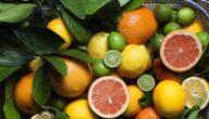 مواسم زراعة الساتسوما وطريقة زراعة الساتسوما