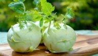 مواسم زراعة الكرنب الساقي وطريقة زراعة الكرنب الساقي