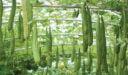 مواسم زراعة الليف و طريقة زراعة الليف