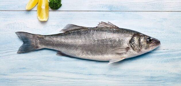 أنواع السمك في تركيا
