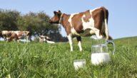 أكثر الدول المستوردة لحليب الأبقار