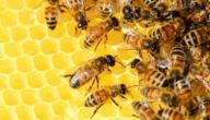 أمراض النحل خلال الصيف