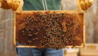 أنواع خلايا النحل