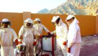 الأدوات المستخدمة في تربية النحل