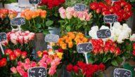 البضائع المطلوبة في أسواق هولندا