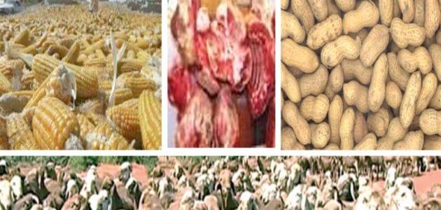 التصدير من السودان الإجراءات و الوثائق المطلوبة