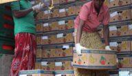 التصدير من الصومال الإجراءات والوثائق