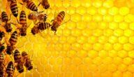 الشكل الهندسي لخلية النحل