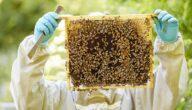 تحديات مشروع تربية النحل