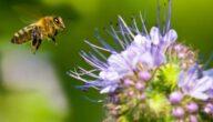 تربية النحل في تونس