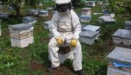 تكلفة مشروع تربية النحل في تونس