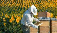 دراسة جدوى لإنشاء مزرعة تربية نحل