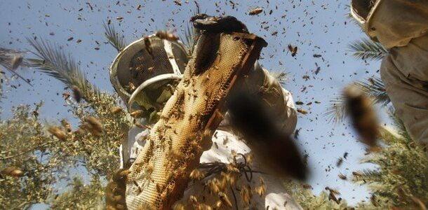 طرق جني العسل وفرز العسل