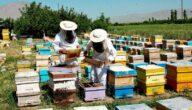 طرق زيادة إنتاج عسل النحل