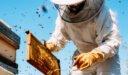 طرق صحيحة لنجاح مشروع تربية النحل