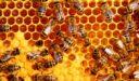 علاج النحل الزاحف