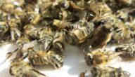 علاج مرض النوزيما الذي يصيب النحل بالشيح
