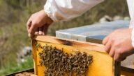 فوائد تربية النحل