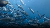 مشاكل تربية الأسماك