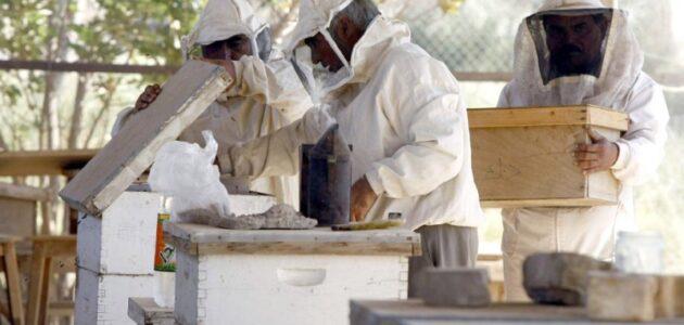 مشروع تربية النحل في الجزائر