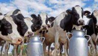 أخطر الأمراض التي تصيب الأبقار