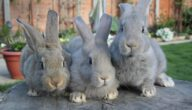 أمراض الأرانب وطرق علاجها
