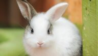 أنواع مساكن الأرانب وشروطها