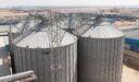مصنع أعلاف الدواجن في مصر