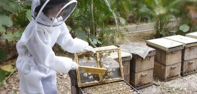 الوسائل المستعملة في تربية النحل