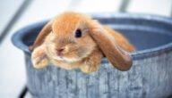 دراسة جدوى مشروع تربية الأرانب في مصر