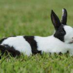 دراسة مشروع تربية الأرانب