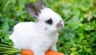 علاج أمراض الأرانب بالأعشاب