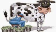 فوائد تربية الأبقار على الاقتصاد