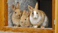 فوائد تربية الأرانب
