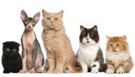 أنواع القطط النادرة في العالم