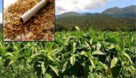 صناعة التبغ مكونات صناعة التبغ