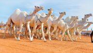 معوقات تربية الجمال في الوطن العربي