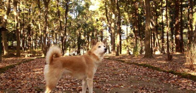 أجمل أنواع الكلاب