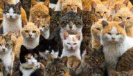 أشهر أنواع القطط المنزلية