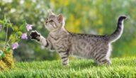 أغرب أنواع القطط