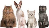 أغلى القطط في العالم