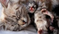 أمراض القطط حديثة الولادة