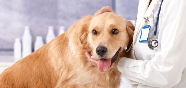 أمراض الكلاب البكتيرية