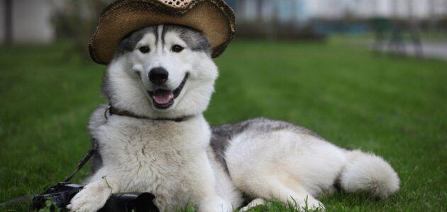 أمراض الكلاب الجلدية