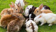 أمراض الأرانب في الصيف