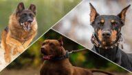 أنواع كلاب الحراسة
