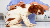 أهم لقاحات الكلاب الوقائية