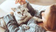الوقاية من أمراض القطط